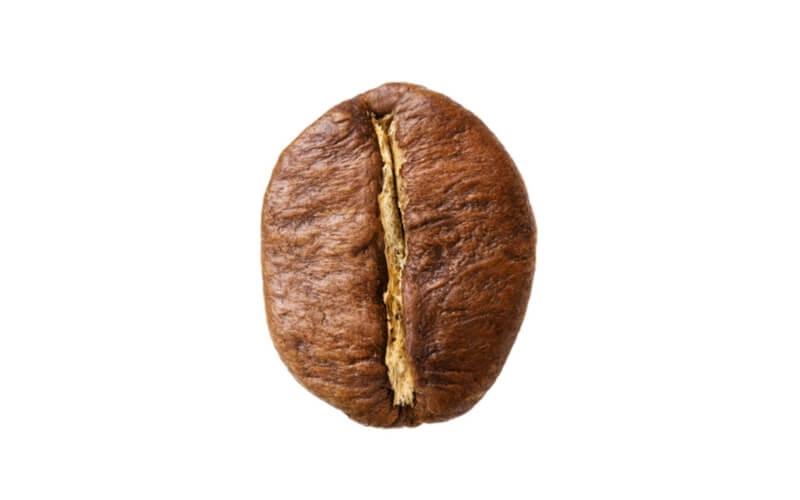 Kaffeebohne Robusta